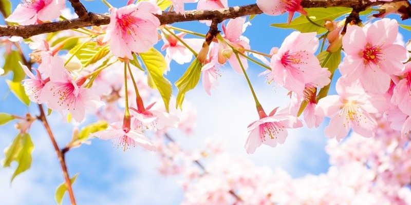 astuces-economies-energie-printemps-800